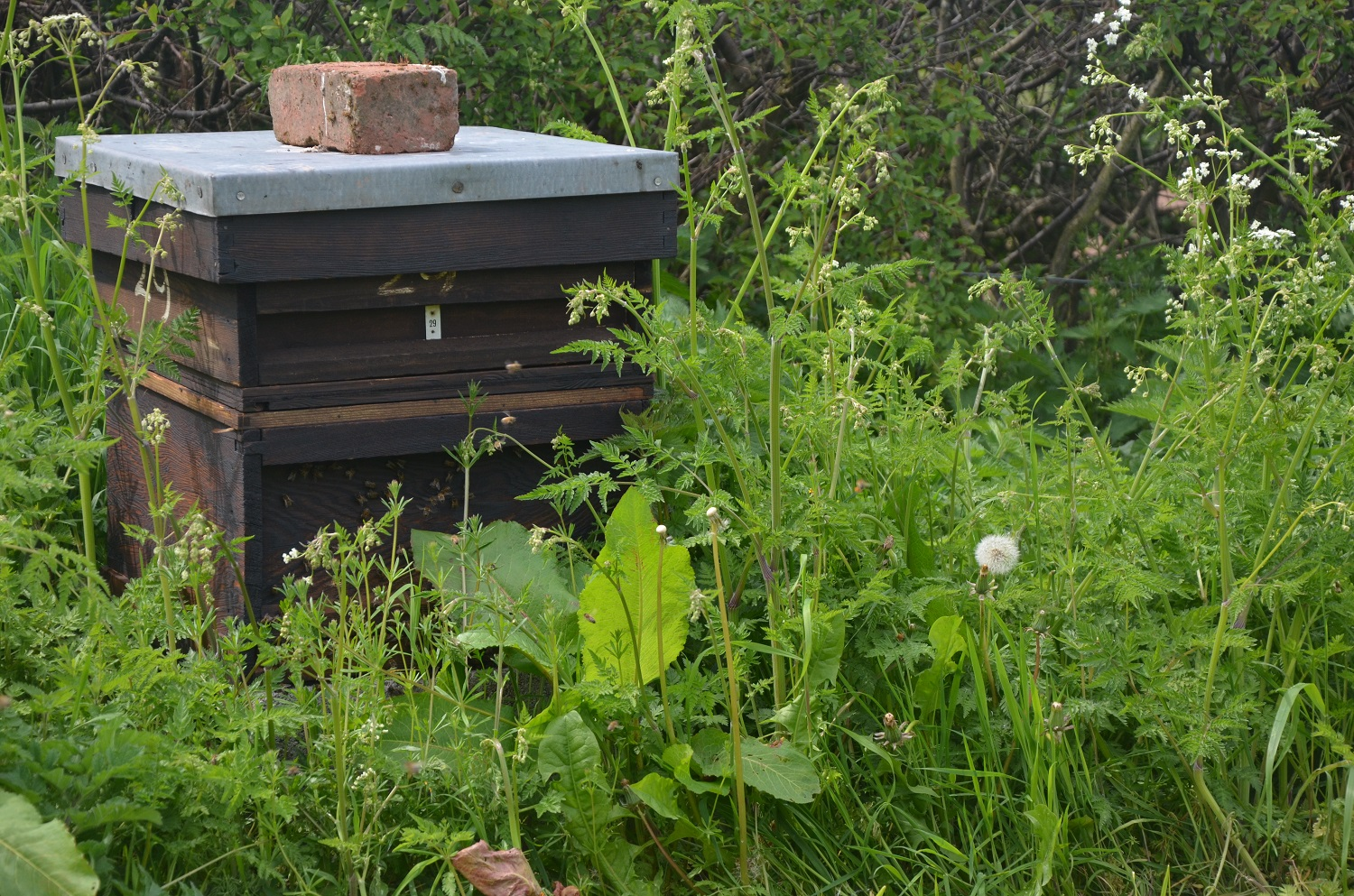 Our honey bees at the beginning of the season - last year it grew to 12 slats high
