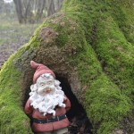 The Gnome - who moves for visitors - in one of the woodlands on the farm