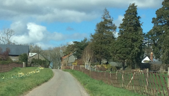 pheasant in foreground, farmhouse gable end visible on the right