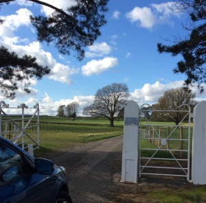 Go through the gate and up the drive